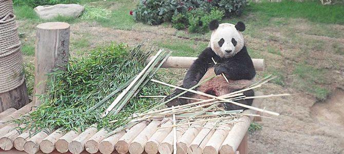 Everland – Panda World