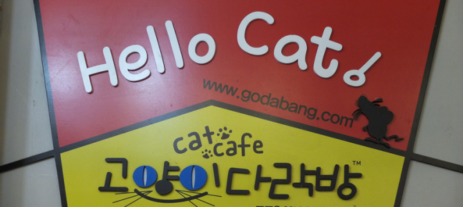 Kedi Kafe – Hello Cat Godabang