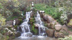 bambu ormanı - şelale & pandalar (: