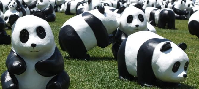 1600 Panda