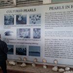 Ha Long Koyu - İnci Müzesi